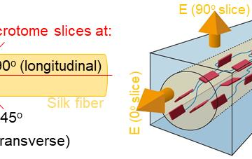 "【Research Paper】""Near-Field IR Orientational Spectroscopy of Silk"""