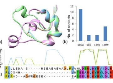 【Published】Molecular dynamics simulations of cognate and non-cognate AspRS-tRNAAsp complexes