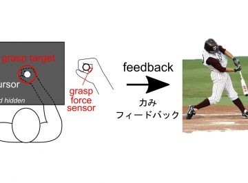 Researchers develop an inexpensive, portable method to measure the arm's stiffness