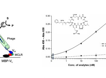 A new technique for the detection of a cyanobacterial toxin microcystin-LR