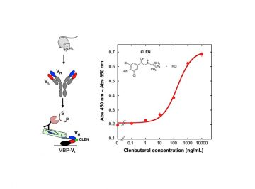【論文】A novel murine antibody and an open sandwich immunoassay for the detection of clenbuterol