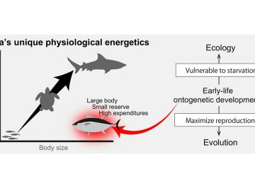 Early-life ontogenetic developments drive tuna ecology and evolution