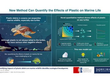 Saving marine life: Novel method quantifies the effects of plastic on marine wildlife