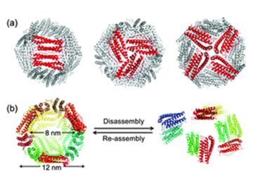 【論文】Single-molecule level dynamic observation of disassembly of the apo-ferritin cage in solution